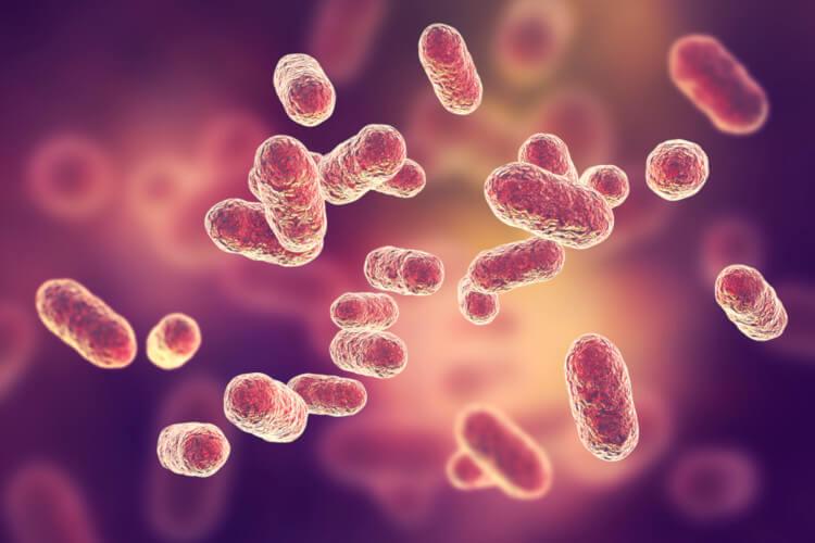 As bactérias podem causar diversas doenças, cuja principal forma de tratamento é pela administração de antibióticos.