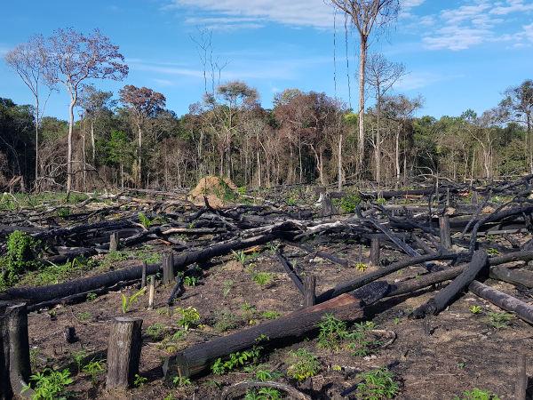 Resultados do corte e queimada de vegetação na Amazônia.