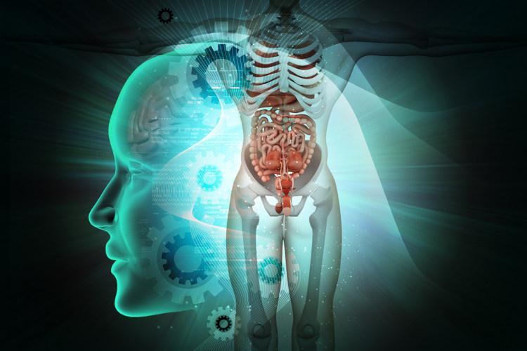 O nosso corpo é uma máquina perfeita, na qual todos os órgãos e sistemas trabalham para garantir o seu equilíbrio.