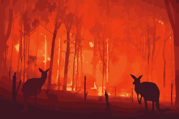 Incêndios na Austrália. A fauna local foi drasticamente afetada pelo fogo no país.