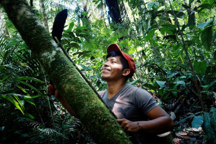 A população nativa tem importante contribuição na preservação da floresta.[1]