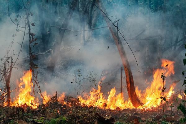 A prática das queimadas é comum na Amazônia para a abertura de áreas de pastagem e instalação de cultivos agrícolas.
