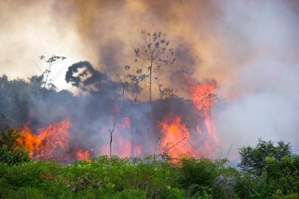 Queimadas na Floresta Amazônica brasileira