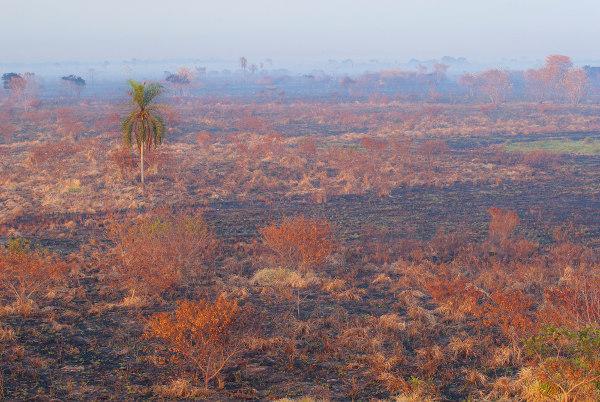Resultado de queimadas no município de Ivinhema, Mato Grosso do Sul.