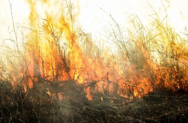 As práticas de queimada são comuns no Brasil para a criação de áreas de pastagem. [1]