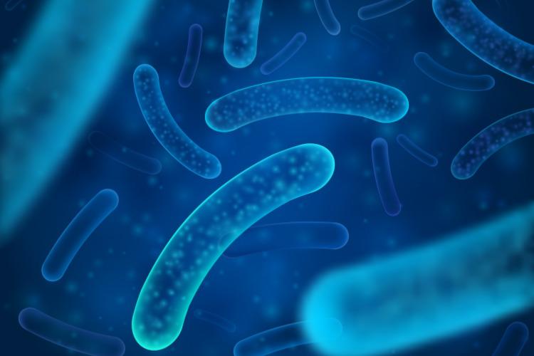 A resistência bacteriana é um exemplo de como a seleção natural atua.