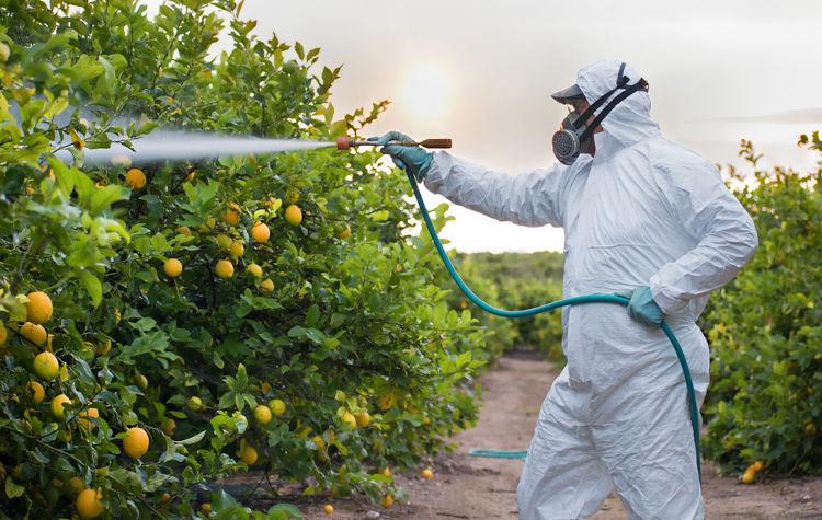 O uso de compostos químicos, como os agrotóxicos nas lavouras, pode ser prejudicial para a saúde dos seres humanos.