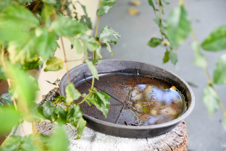 Não deixar água parada é uma das formas de evitar a proliferação do mosquito transmissor da dengue.