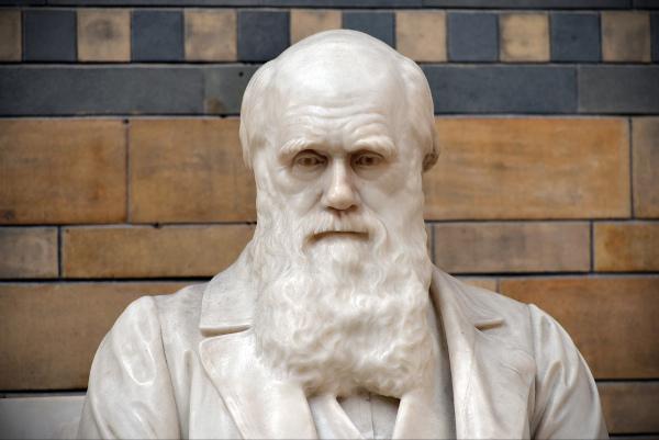 A seleção natural é uma teoria que foi proposta por Charles Darwin.[1]