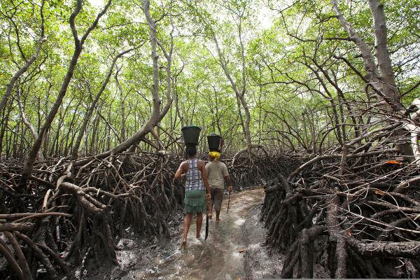 O desequilíbrio ecossistêmico causado pelo desmatamento prejudica diretamente as comunidades extrativistas. [2]