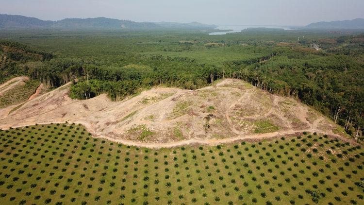 O avanço das monoculturas em áreas florestadas é umas das consequências da implementação do modelo da Revolução Verde.