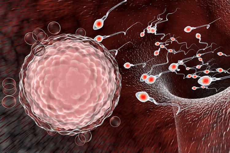 A reprodução sexuada não leva ao surgimento de novos alelos, mas sim a uma nova combinação.