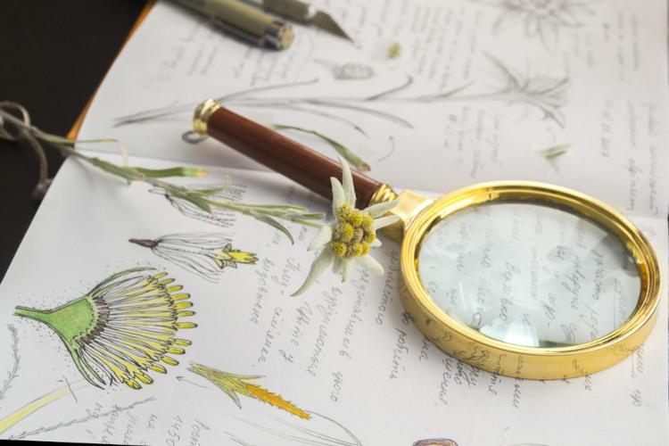 Ao estudar Botânica, lembre-se de rever os conceitos básicos.