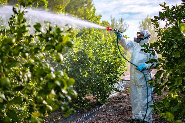 Os agrotóxicos são insumos químicos utilizados nas lavouras para combater-se pragas e aumentar-se a produção agrícola.
