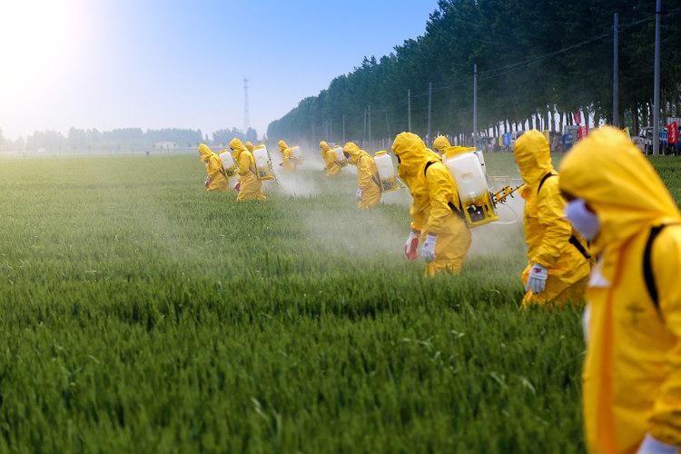 Nas lavouras, a aplicação de agrotóxicos deve ser feita com uso de equipamentos de proteção, em razão do risco de contaminação dos trabalhadores.
