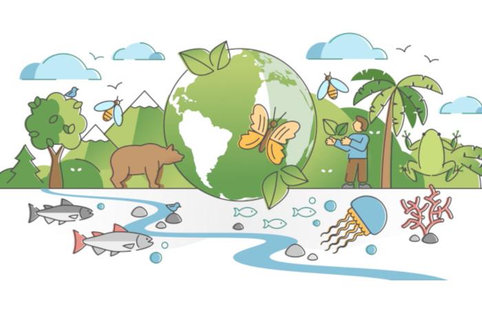 A preservação da biodiversidade é fundamental para o equilíbrio do planeta.