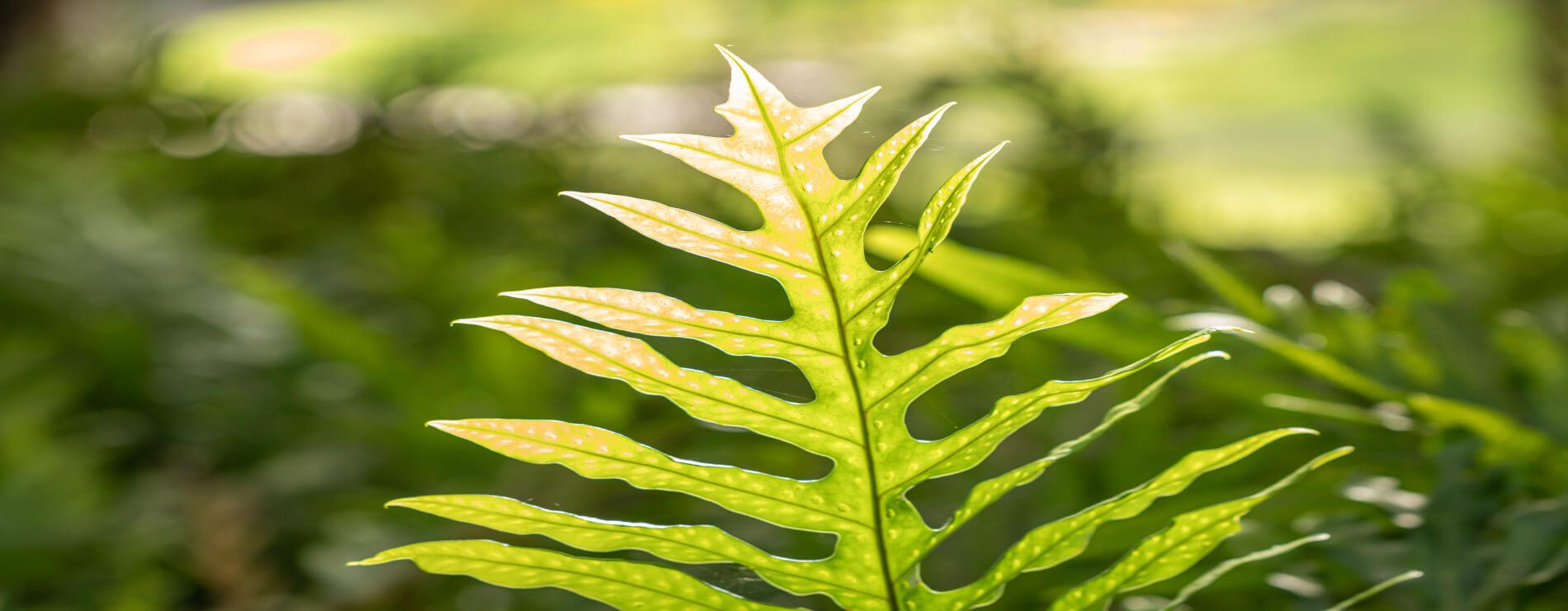 Botânica no Enem