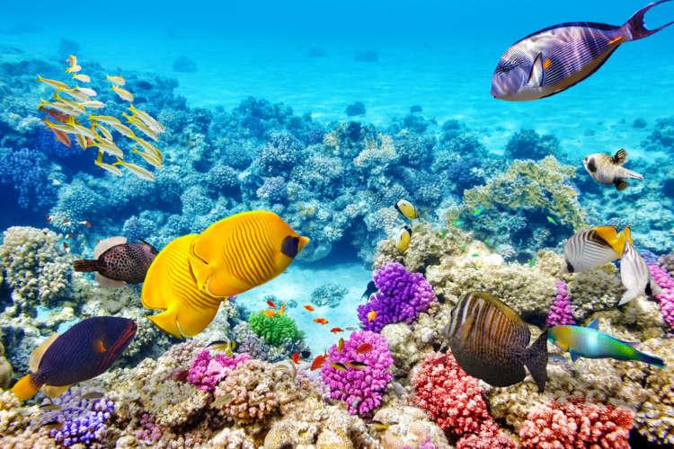 Uma das ameaças aos corais é o chamado branqueamento de corais, um fenômeno que ocorre como consequência, dentre outros fatores, do aumento da temperatura das águas.