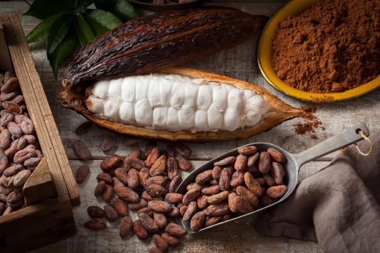 O cacau é um alimento que apresenta uma série de benefícios ao organismo.