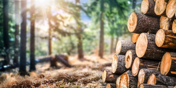Os recursos naturais são fundamentais na manutenção da vida humana.