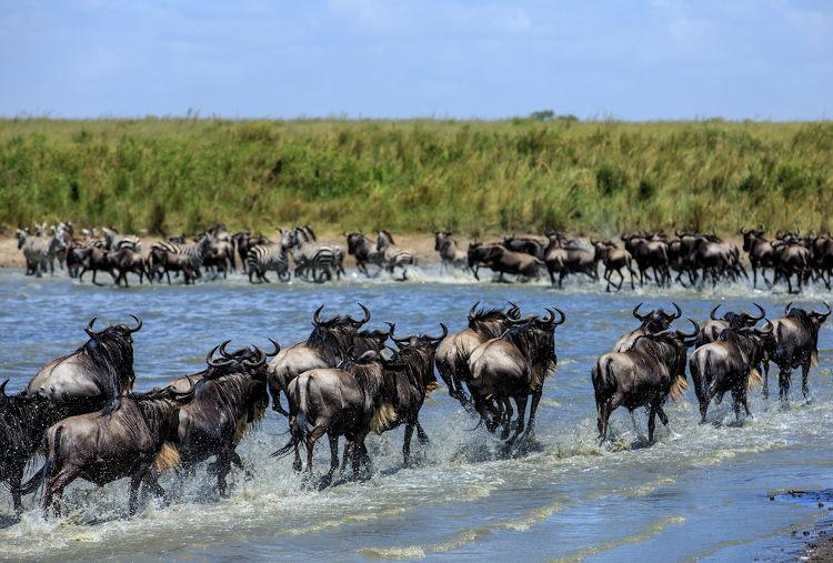 Migração de animais.