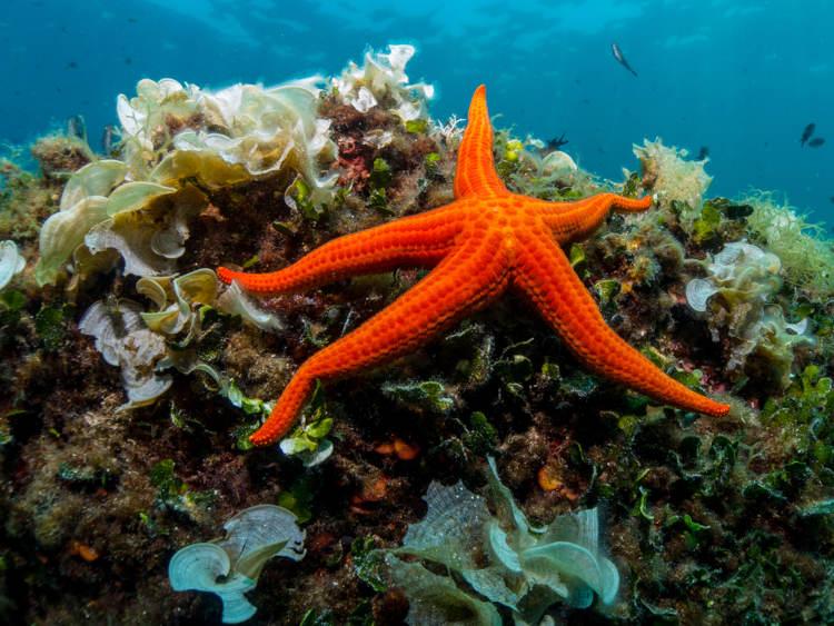 As estrelas-do-mar são exemplos de equinodermos.