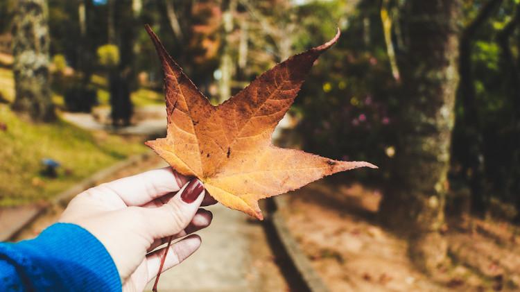 O outono é conhecido como a estação das folhas secas, já que, nesse período, muitas árvores amarelam e perdem as suas folhas.
