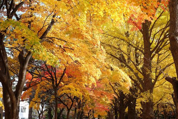 No Hemisfério Norte, a ocorrência do outono é perceptível na paisagem, em razão do amarelamento e posterior queda das folhas das árvores.