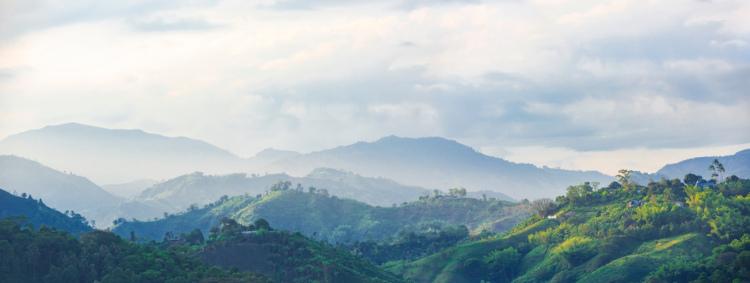 Paisagem de área de café na Colômbia.
