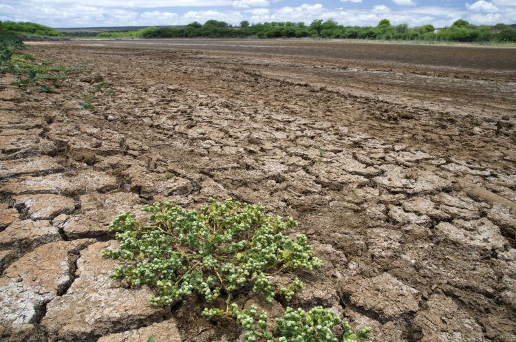 Leito seco de rio em Pernambuco, Brasil.