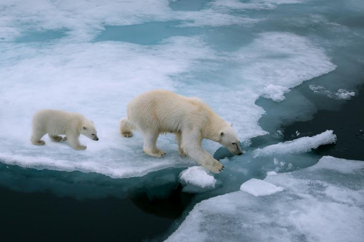 As mudanças climáticas podem colocar em risco a sobrevivência de várias espécies.