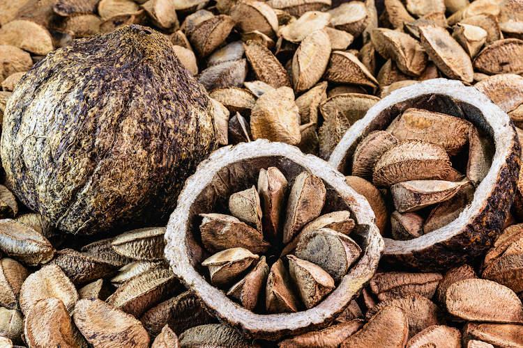 Castanha-do-pará, um item bastante produzido e exportado no Acre.