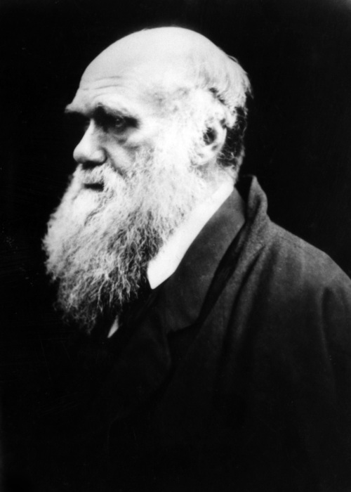 Charles Darwin foi o naturalista que propôs a ideia de seleção natural.