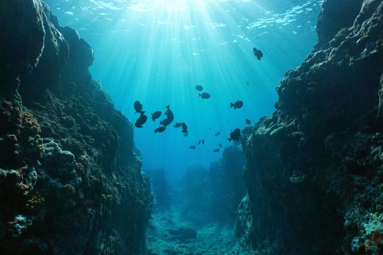 O assoalho oceânico é marcado por intensas atividades geológicas, mas também por uma grande biodiversidade marinha.