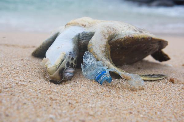 A poluição é responsável pela morte de várias espécies.