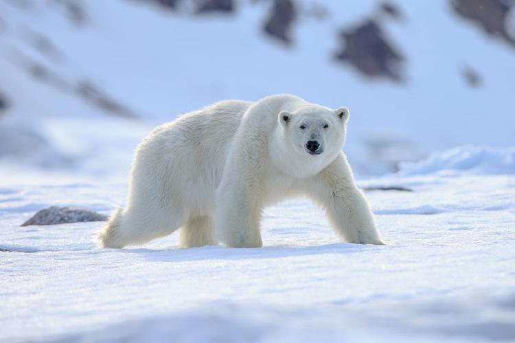 As mudanças climáticas estão ameaçando a sobrevivência de várias espécies.