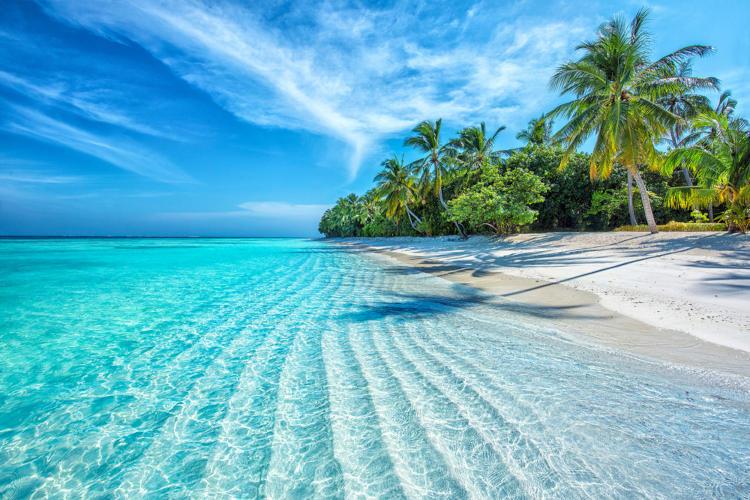 Foto de uma praia das ilhas Maldivas; no primeiro plano, água cristalina e areia, ao fundo, vegetação.