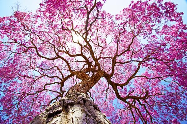 A primavera é conhecida como a estação das flores.