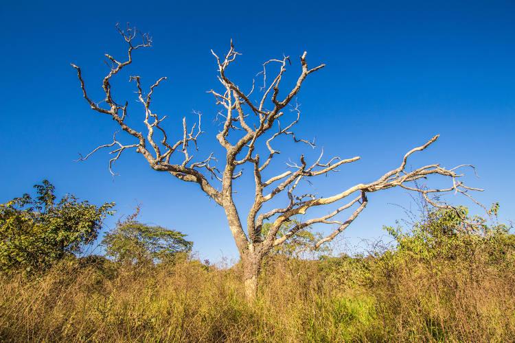 Vegetação de Mata Seca em Goiás