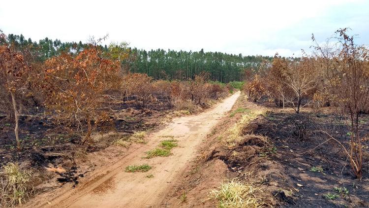 Vegetação queimada no Cerrado