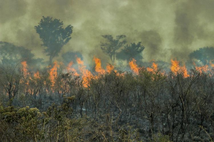 As queimadas perturbam o equilíbrio natural do ecossistema, provocando a morte de várias espécies e destruição do habitat.