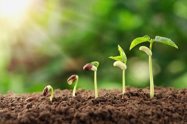 Para germinarem, as sementes precisam encontrar condições ideias, como disponibilidade de água.