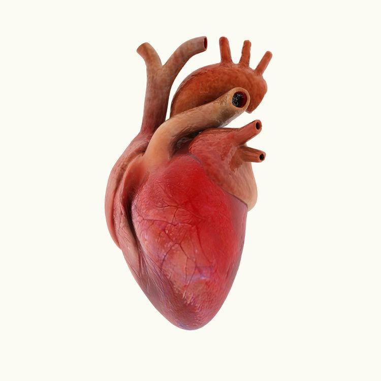 O coração bombeia o sangue para várias partes do nosso corpo.