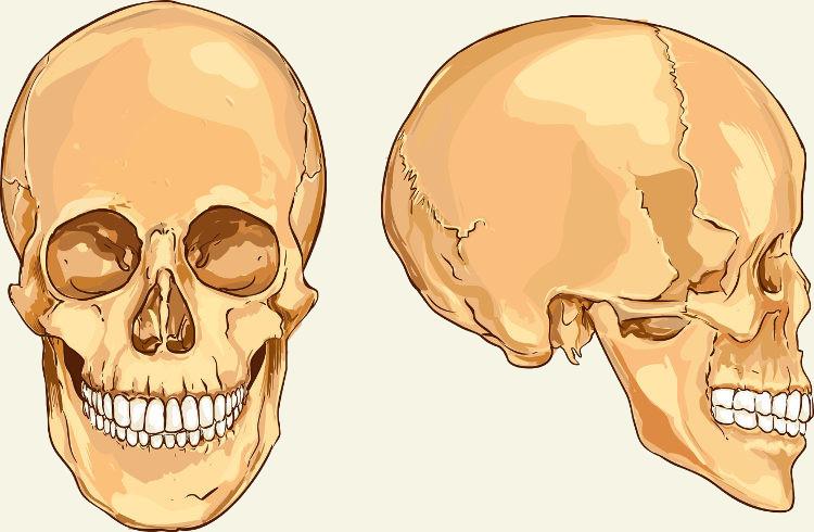 Os ossos do crânio podem ser classificados em ossos faciais e ossos cranianos.