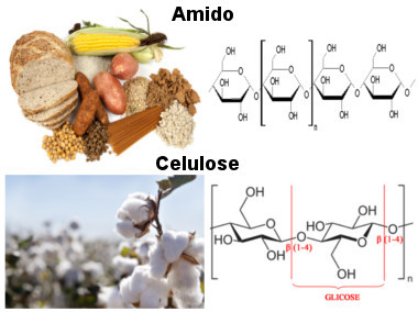 esteroides naturales caseros