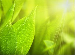 A fotossíntese é reação de oxidorredução
