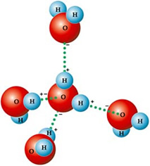 Por serem polares, ocorrem ligações de hidrogênio entre as moléculas de água.