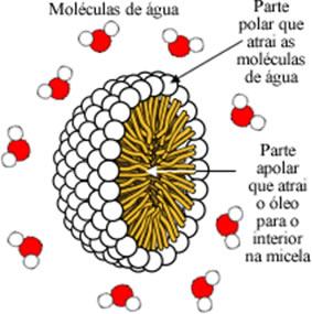 Representação esquemática de uma micela contendo óleo em seu interior