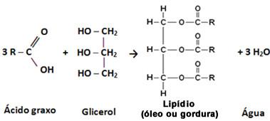 óleos E Gorduras Constituição Química Dos óleos E Gorduras