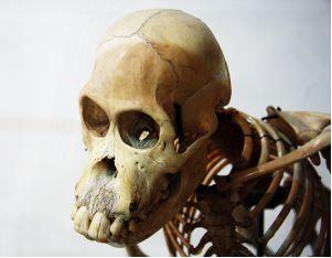 Os ossos de animais contêm fosfato de cálcio